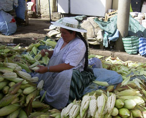venta de maiz